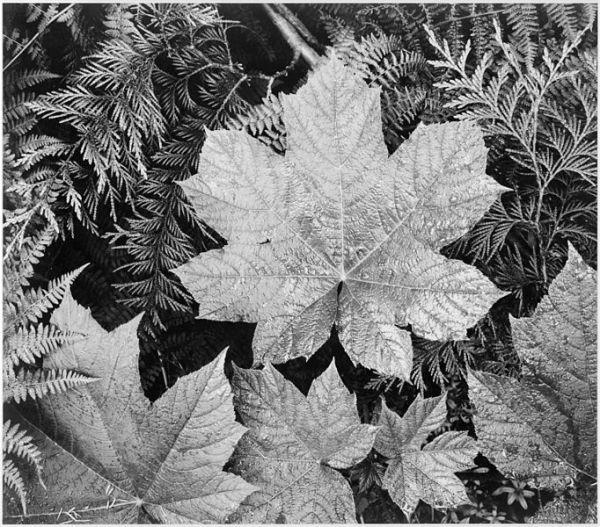 Ansel-Adams-1942-parque-nacional-glacier