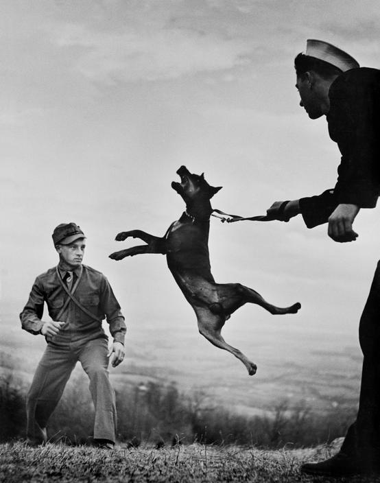 eugene-smith-perro