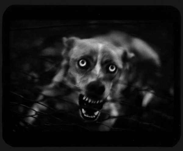 giacomo-brunelli-perro