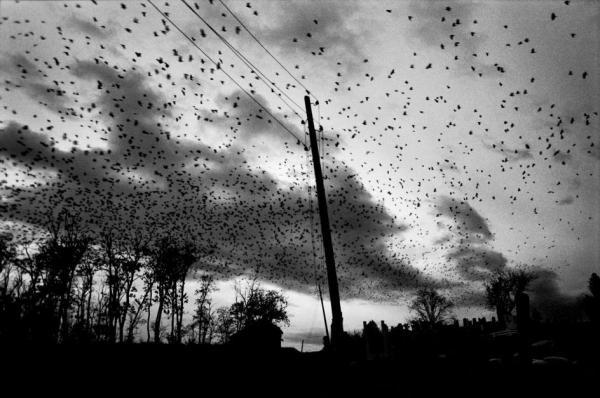 paolo pellegrin birds kosavo