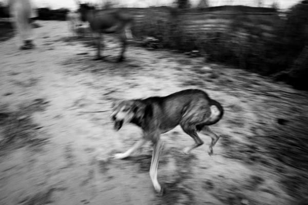 paolo-pellegrin-perro