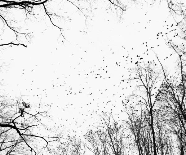 tamas_dezso_ha_crows