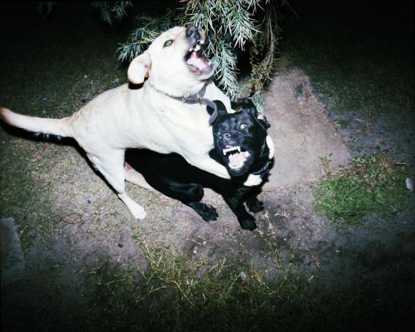 trent-park-perro